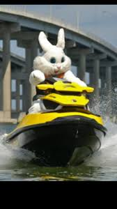 Easter fun in the Bay of Islands - Slide
