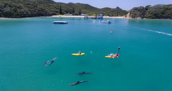 October School holidays in the Bay of Islands - Teaser Image